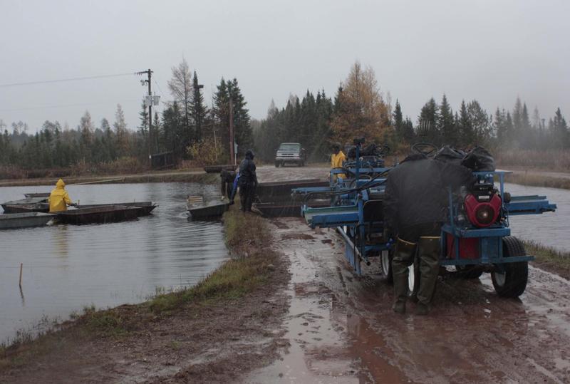 James Lake Farms in Three Lakes