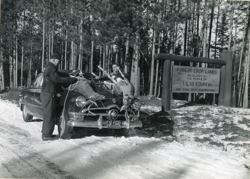 Two hunters tie bucks killed on Vilas County Forest Crop Land near Conover to the hood of their car. Photographed November 1951 by Dean Tvedt.