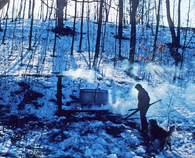 A maple syrup operation.