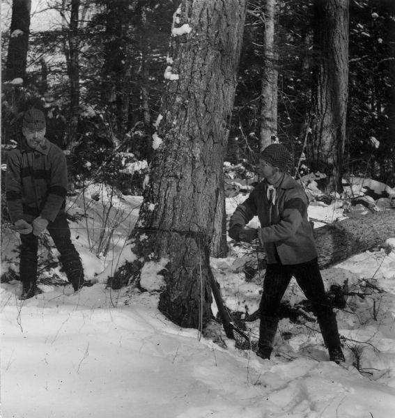 Sigvart Solbrg and Anton Follstad sawing a tree down during winter in Langlade County in 1890.
