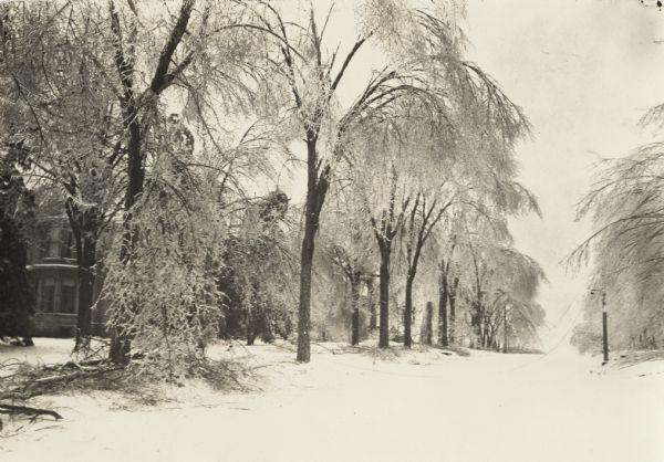 """A 1922 view of an ice covered street, trees and houses. Text on back of photograph reads: """"Sleet storm of February 22nd & 23rd/22."""""""