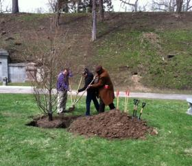 City and county representatives plant a Dawn Redwood tree in Mount Hope Cemetery