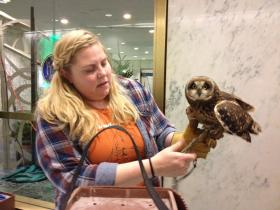 Katherine Murphy, of Adirondack Wildlife, with a short eared owl which is endangered in New York