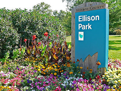 Ellison Park on a drier day