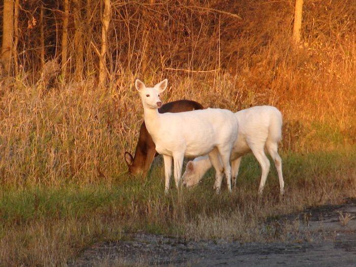 white deer jewish dating site White deer's best free dating site 100% free online dating for white deer singles at  100% free online dating in white deer, tx  white deer jewish singles.