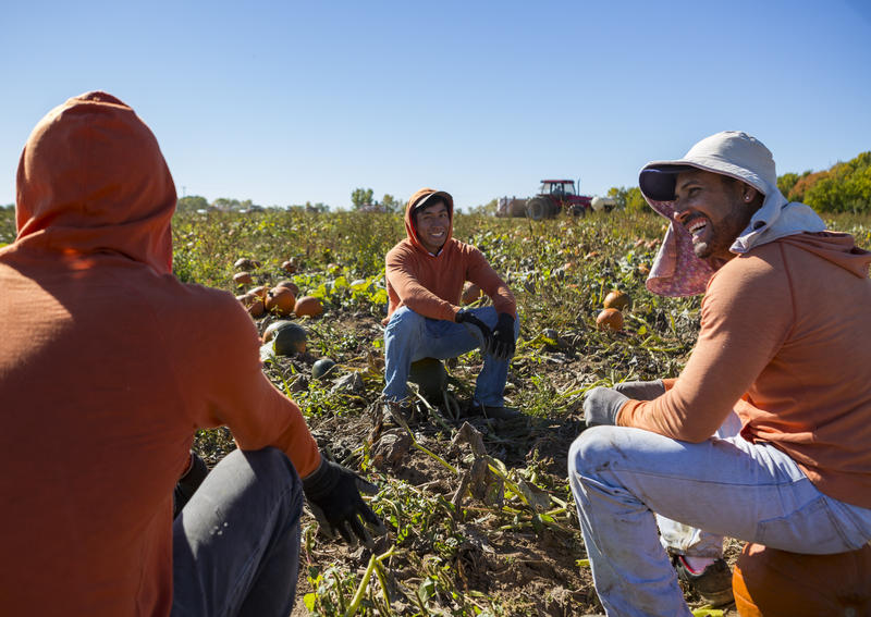 From left, Rene Omar Montes, Antonio Romero Tapia and Ruben Mendoza Cibrian sit on pumpkins while waiting for the tractor to return with more pumpkin bins at Root Brother Farm in Albion.