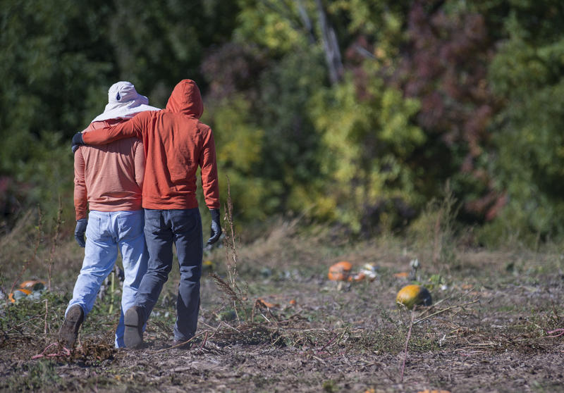 Ruben Mendoza Cibrian, left, and Rene Omar Montes walk to the pumpkin fields together at Root Brothers Farm in Albion.