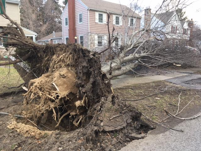 The wind gusts were strong enough to uproot this tree on Drake Drive in Irondequoit.