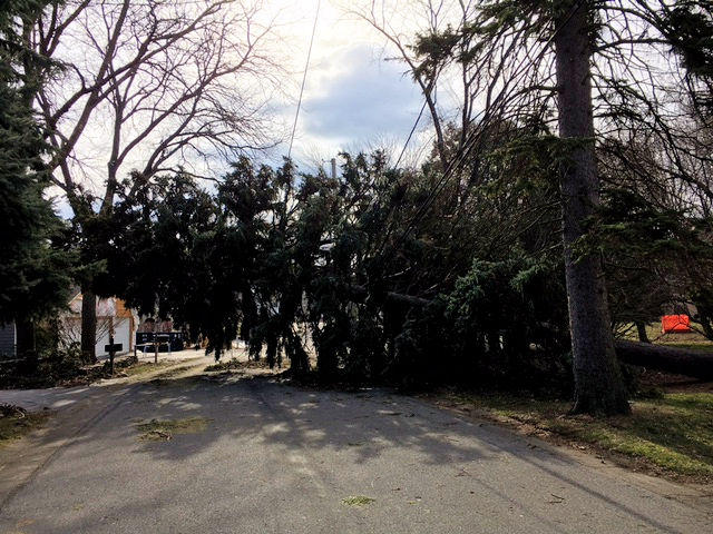 This might make a large Christmas tree, but it's blocking this road in Irondequoit.