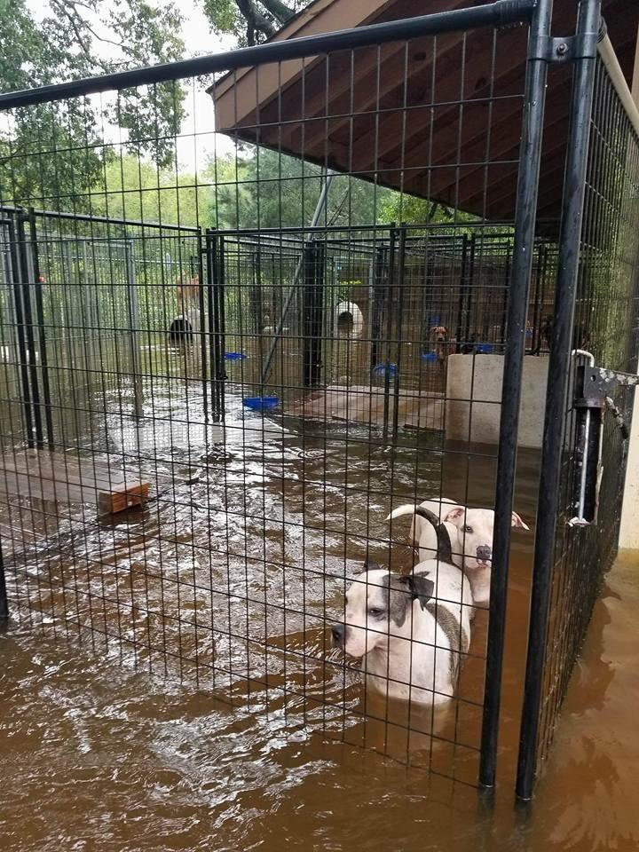 Houston Rescue Large Dogs