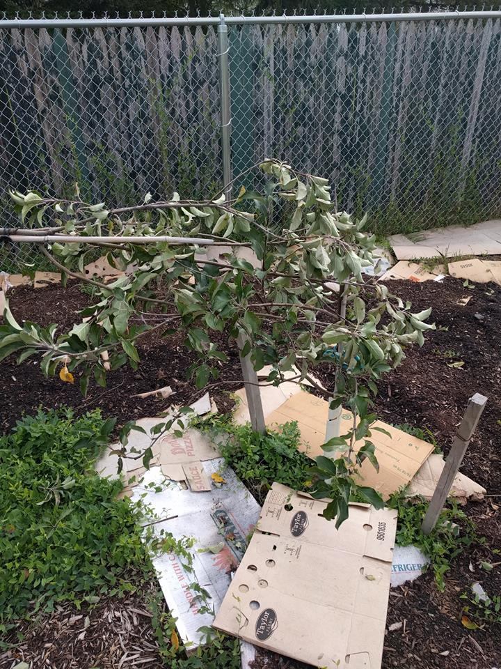 Damage to fruit trees