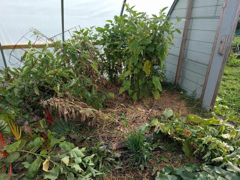 Damaged fruit trees