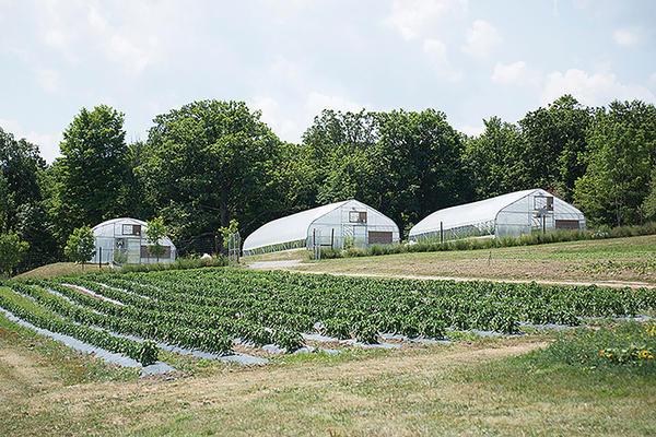 Wegmans Organic Research Farm: Wegmans Farm Experiments With New
