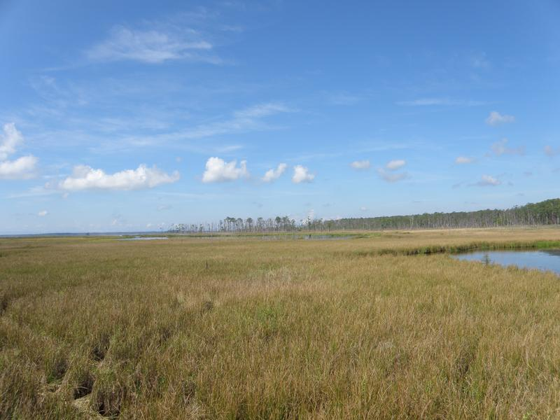 The marsh at Blackwater National Wildlife Refuge