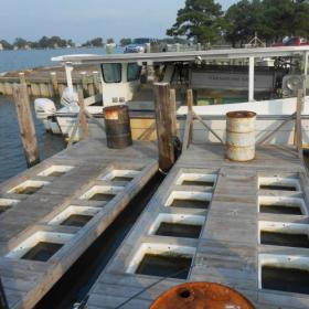 Chesapeake Gold Oyster Farm