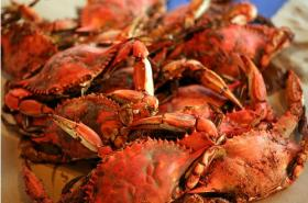 The Maryland blue crab