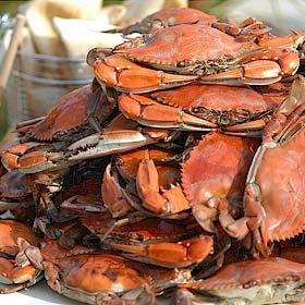 Should a moratorium be put on the Maryland Blue Crab?