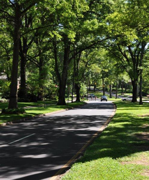 "Dover's favorite suburban street is Queens Road West in Charlotte. ""One day walking, biking or driving would be like passing through a climax forest, with its green"
