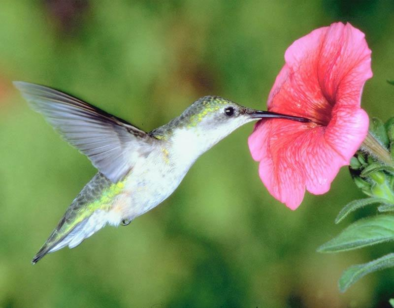 Mutualism: Birds & Flowers | WYPR