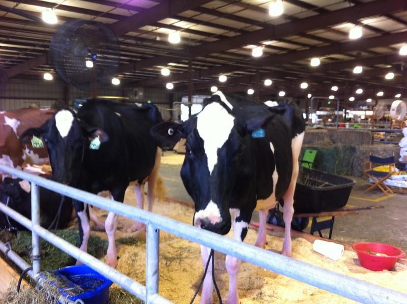 The Cow Palace at the Maryland State Fair.