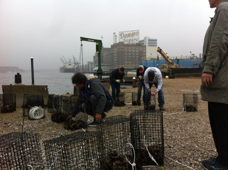 Volunteers prepare oyster cages at the edge of Baltimore's Inner Harbor