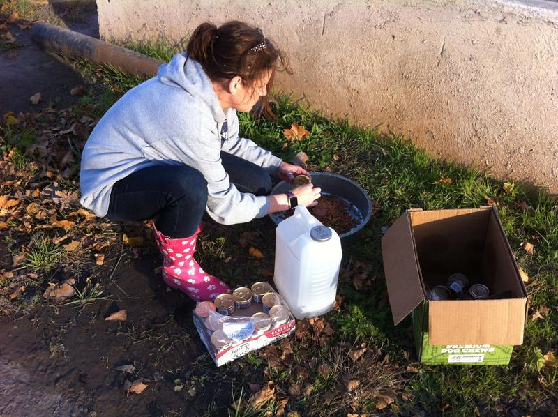 Michelle Eubank puts out food for feral cats at Sparrows Point