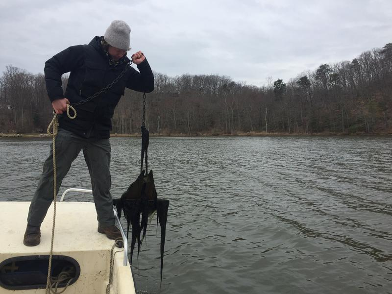Jesse Iliff, of the South River Federation, finds some strange algae on an anchor