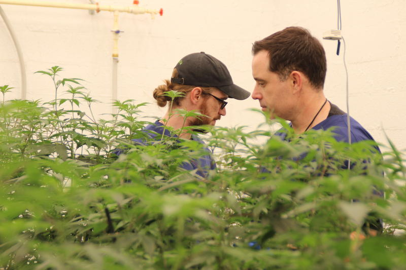Luke Batten [left], Culta's head cultivator, and Mackie Barch [right], president of Culta, examine plants in the genetics room.