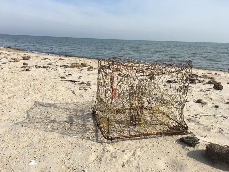 A derelict crab pot on Virginia's Bay shore