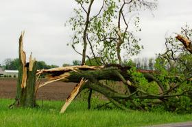 Damage on Federal Road in Cedarville