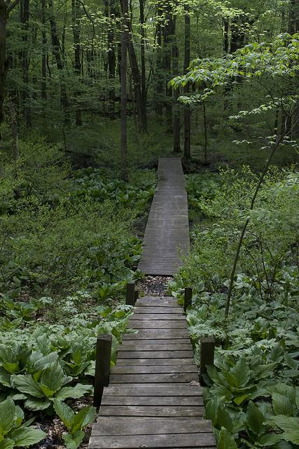 A boardwalk at Oak Openings, part of Toledo MetroParks