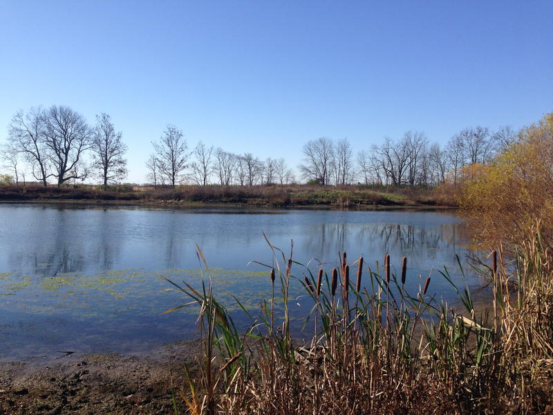 An old pond at Larch Tree golf course will become part of a wildlife refuge.