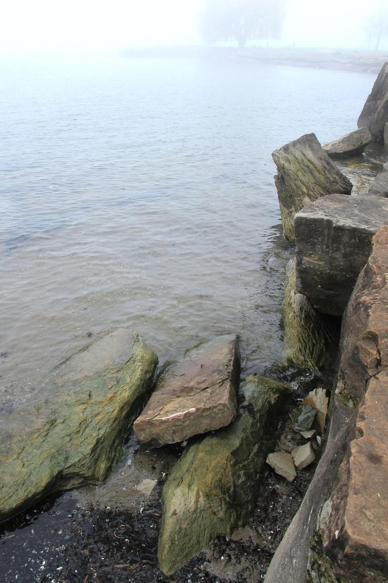The shoreline of Lake Erie can become gummed up with algae during the summer months.