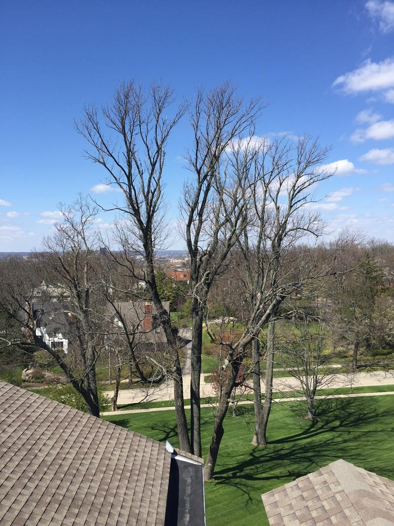"""A view from the """"widow's walk' atop Hawthorne Hill."""