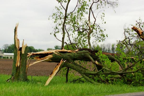 Storm damage on Federal Road in Cedarville
