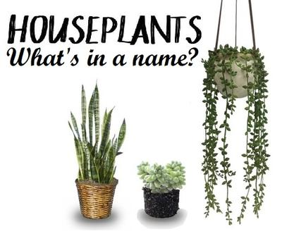 Growing on the High Plains: Houseplant Name Games | HPPR