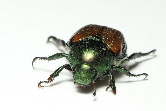 Idaho Officials To Spend $400,000 Fighting Beetle