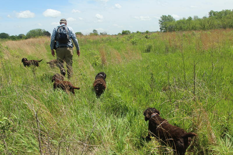Specially Trained Dogs Help Conservationists Find Rare Iowa Turtles