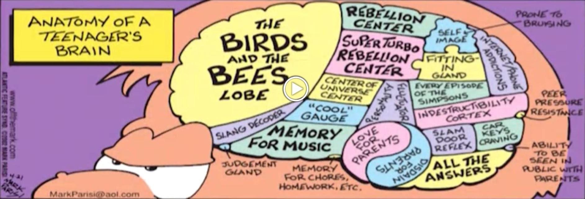 The Purpose Of Teenage Brain >> Pothead Thc And The Teen Brain Aspen Public Radio