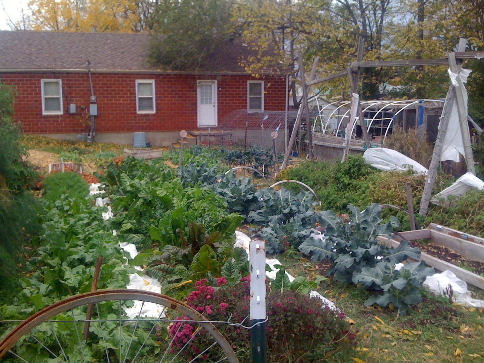 farm your yard: a shared garden | kbia