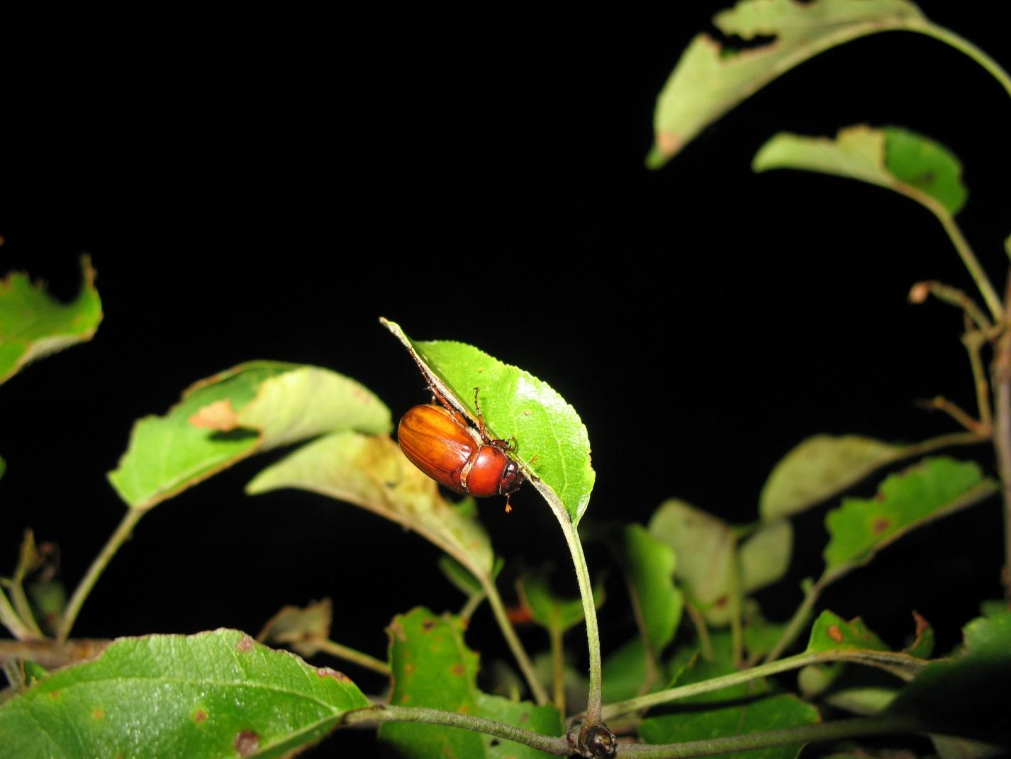 Discover Nature: June Bugs | KBIA