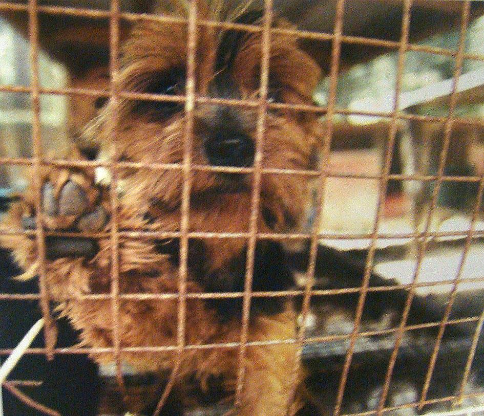 Missouri Tops Humane Society's List of Worst Puppy Mills | KBIA
