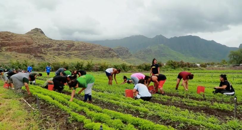 Maʻo Organic Farms Undergoes Massive Expansion Hawaii Public Radio