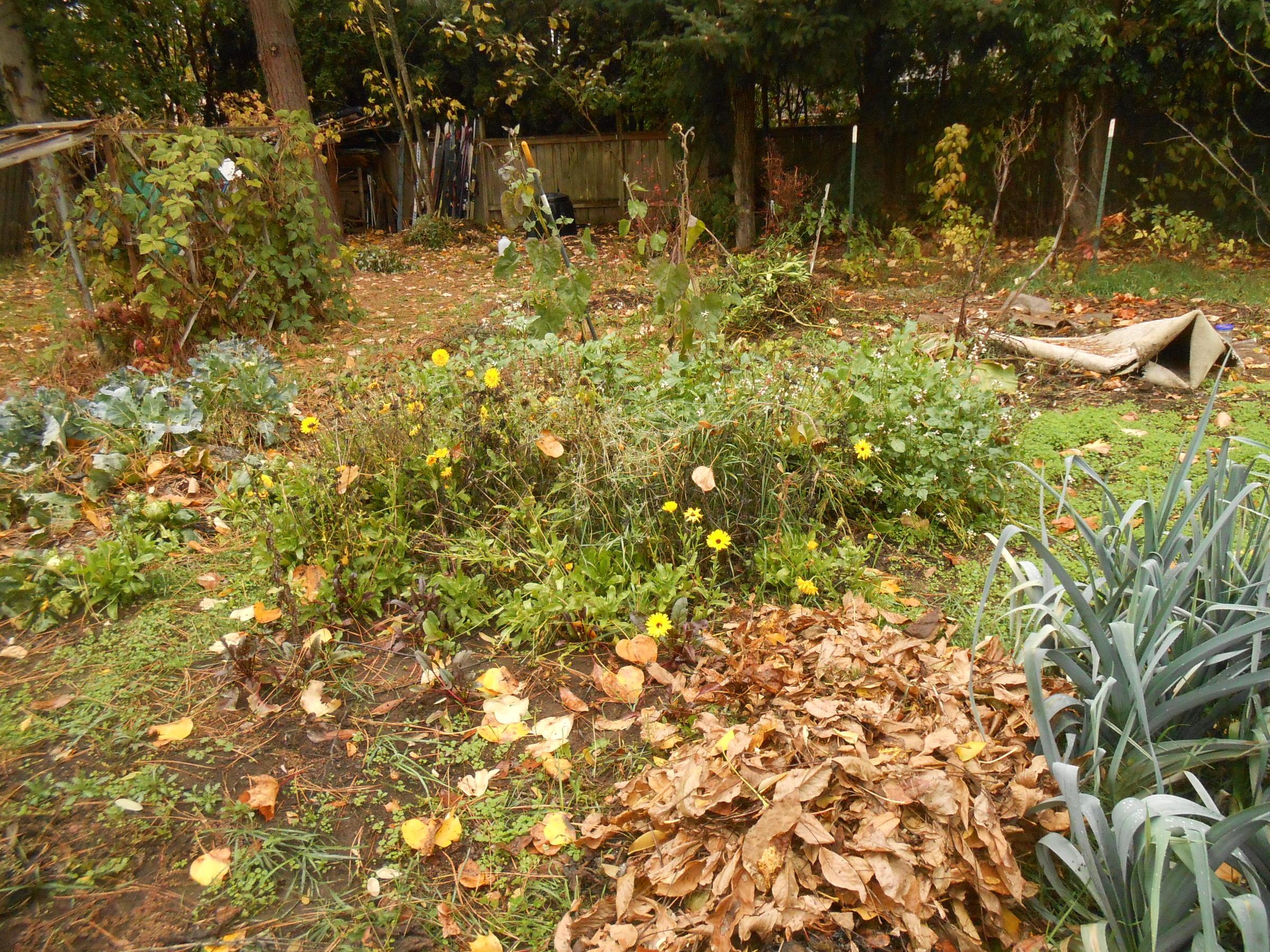 Good Gardening Fall Garden Clean Up