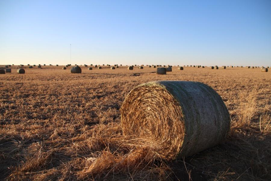 The Bahr family connects to the internet through the cell tower seen here beyond a field of hay bales in Barton County. (Photo by David Condos, Kansas News Service)