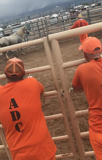 Arizona Prison Inmates Find Freedom Through Training Wild