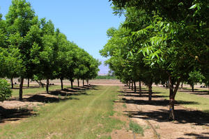 Sustainable Agriculture Field Day to be held at NMSU | KRWG
