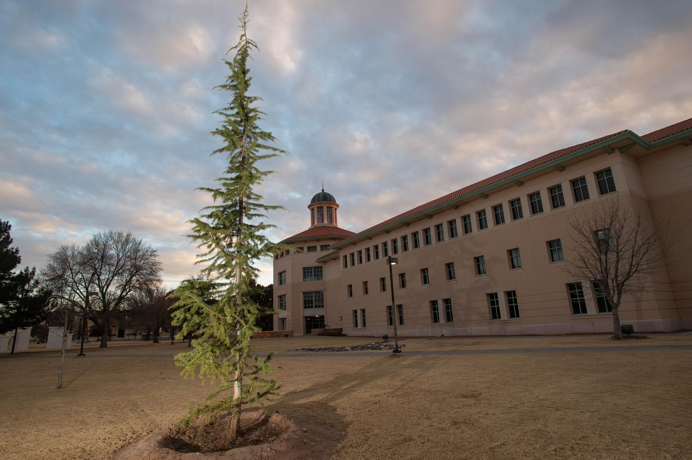Couple Donates 12 Trees To Nmsu Las Cruces Campus To Honor Storytellers Of The Area Krwg