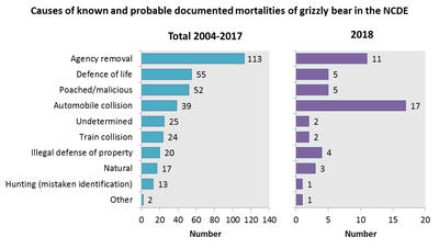 51 Grizzly Mortalities, Deadliest Year On Record For Montana