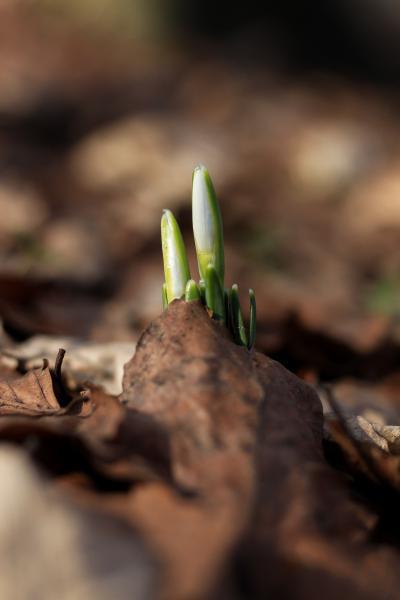Tips for Hardy Gardeners: